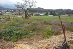 2012 april 財田の窯 013